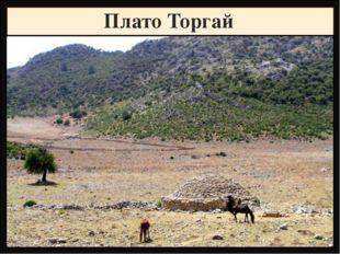 Плато Торгай Название Высота, метры Фундамент, складчатость Горные породы Рел