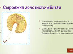 Сыроежка лиловая Растёт в лиственных и хвойных лесах с августа по октябрь. Ш
