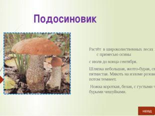 Пликария Развивается на земле в лиственных лесах. Растёт обычно тесными груп