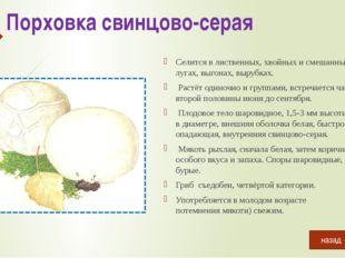 Белый гриб березовый Растёт в березовых лесах. Плодоносит с начала июля до се