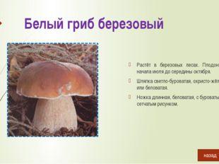Подберёзовик болотный Растёт в сыроватых или заболоченных лесах. Встречается