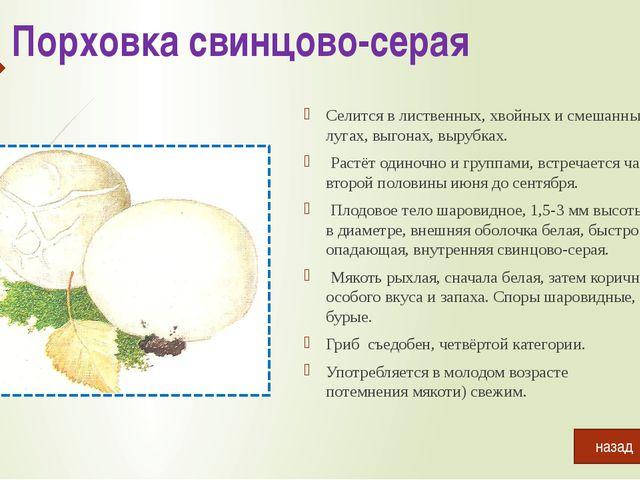 Белый гриб березовый Растёт в березовых лесах. Плодоносит с начала июля до се...