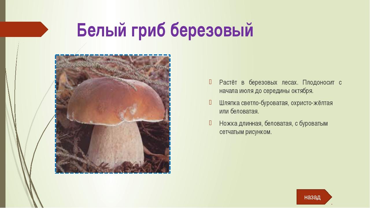 Подберёзовик болотный Растёт в сыроватых или заболоченных лесах. Встречается...
