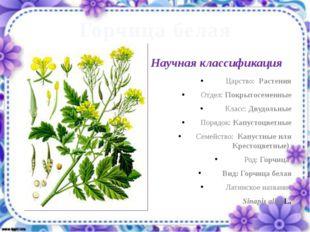 Горчица белая Царство: Растения Отдел: Покрытосеменные Класс: Двудольные Поря