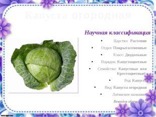 Капуста огородная Научная классификация Царство: Растения Отдел: Покрытосемен