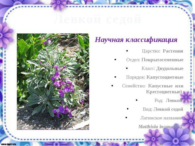 Левкой седой Царство: Растения Отдел: Покрытосеменные Класс: Двудольные Поряд...