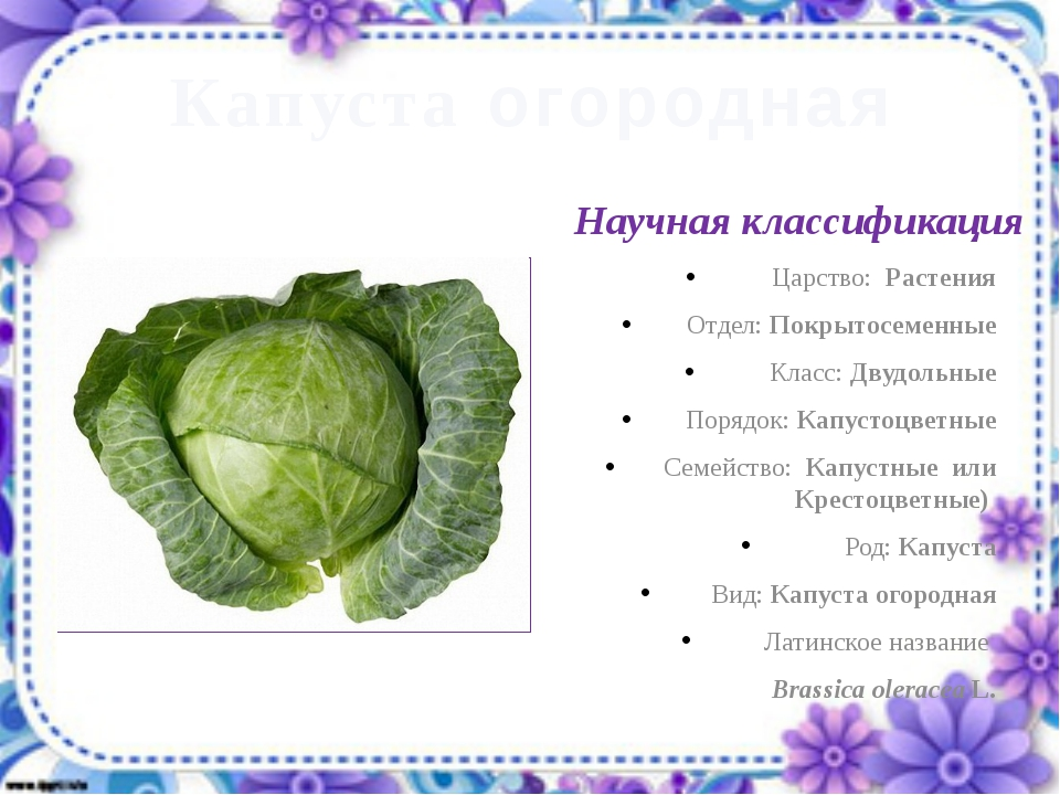 Капуста огородная Научная классификация Царство: Растения Отдел: Покрытосемен...