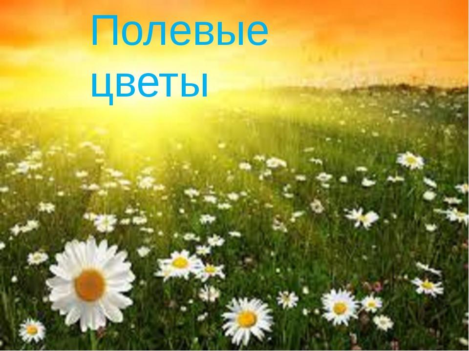 Полевые цветы Полевые цветы