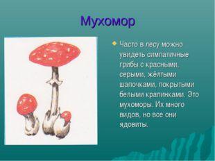 Мухомор Часто в лесу можно увидеть симпатичные грибы с красными, серыми, жёлт
