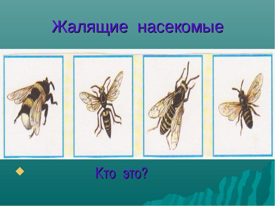 Жалящие насекомые Кто это?