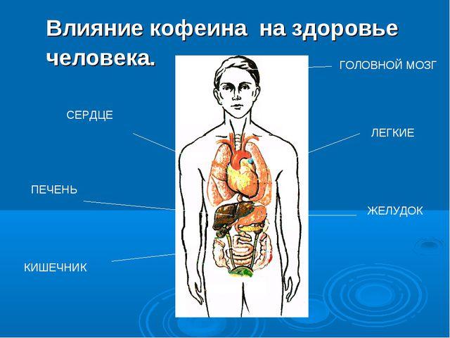 Влияние кофеина на здоровье человека. ПЕЧЕНЬ ГОЛОВНОЙ МОЗГ ЛЕГКИЕ СЕРДЦЕ ЖЕЛУ...