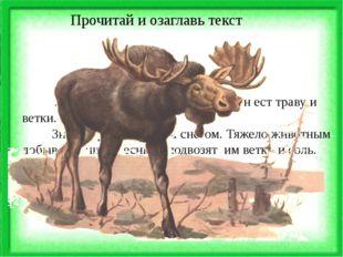 Лось - большой лесной зверь. Он ест траву и ветки. Зимой трава засыпана снег