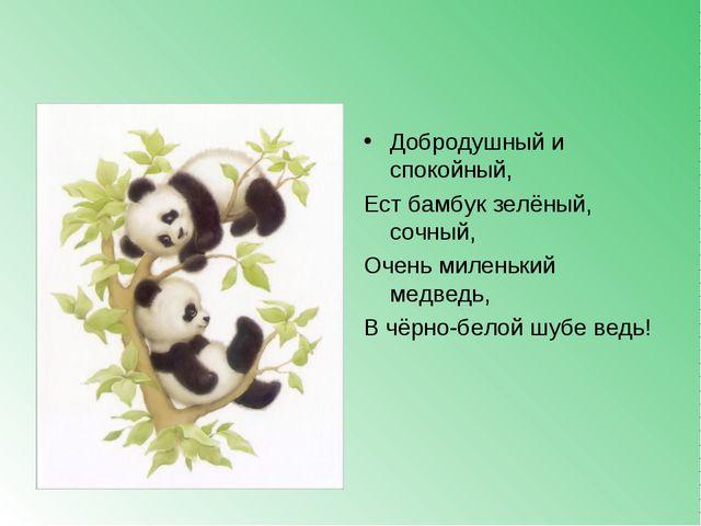 Добродушный и спокойный, Ест бамбук зелёный, сочный, Очень миленький медведь,...