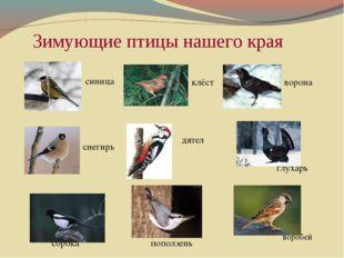 Зимующие птицы нашего края    синица  клёст ворона снегирь дятел г