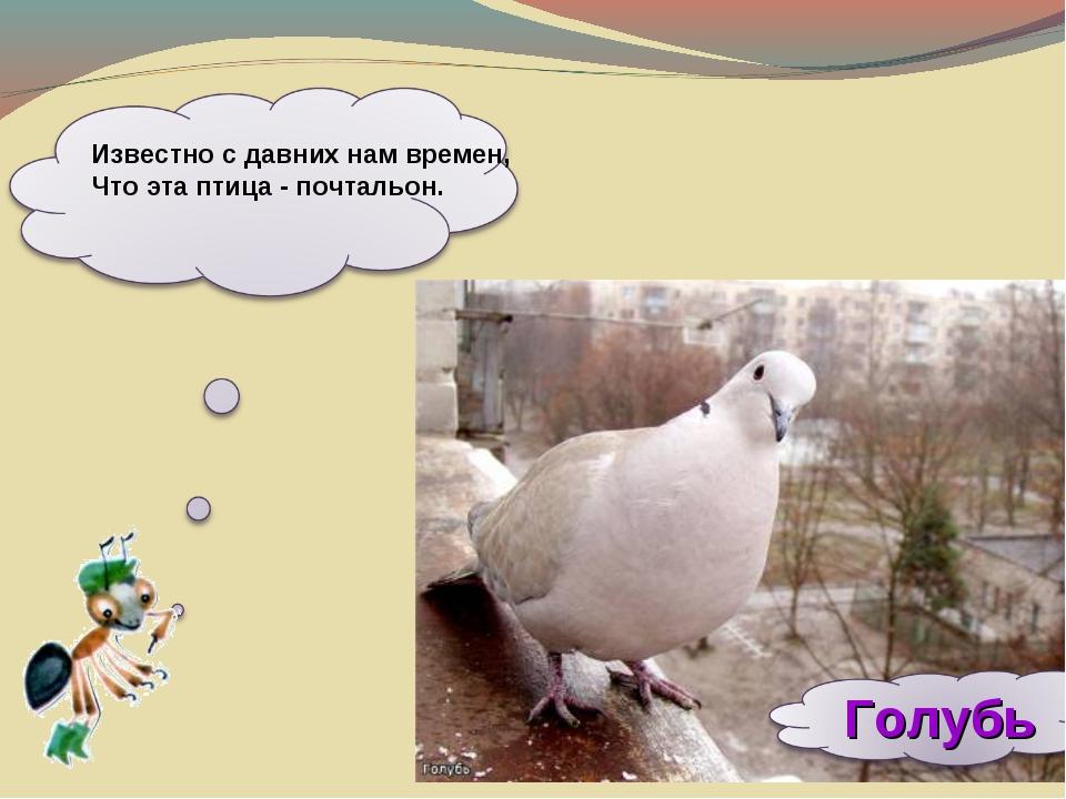 Известно с давних нам времен, Что эта птица - почтальон.