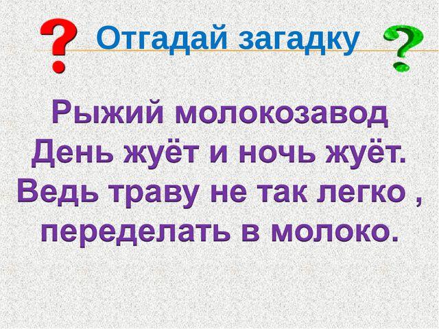 Отгадай загадку