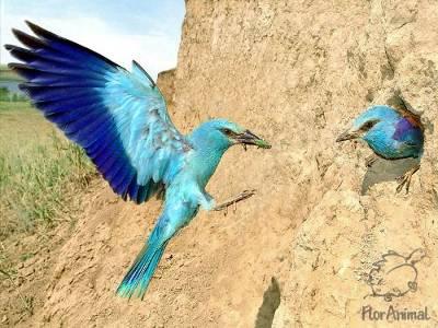 Фотографии животных :: Птицы