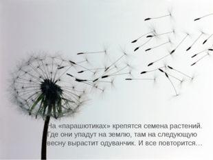 На «парашютиках» крепятся семена растений. Где они упадут на землю, там на сл