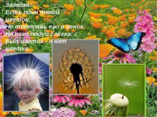 Загадка: Есть один такой цветок, Не вплетешь его в венок. На него подуй слегк