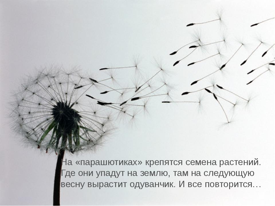 На «парашютиках» крепятся семена растений. Где они упадут на землю, там на сл...