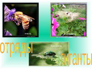 пчела пчела бражник бронзовка