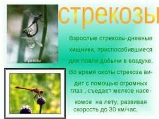Взрослые стрекозы-дневные хищники, приспособившиеся для ловли добычи в воздух