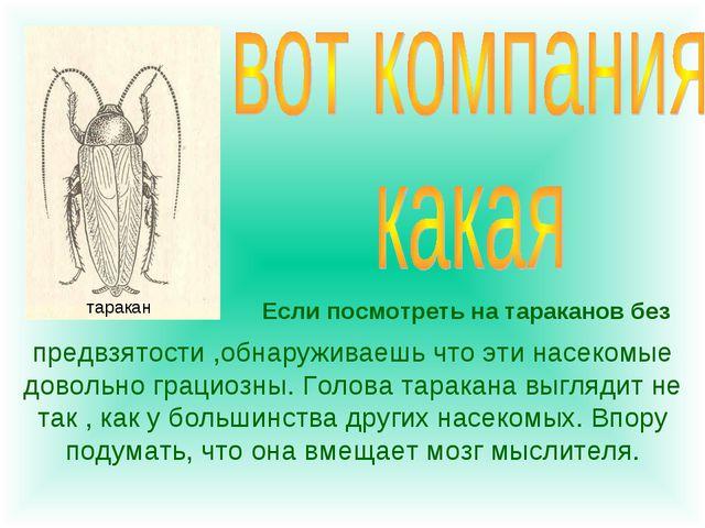 Если посмотреть на тараканов без предвзятости ,обнаруживаешь что эти насекомы...