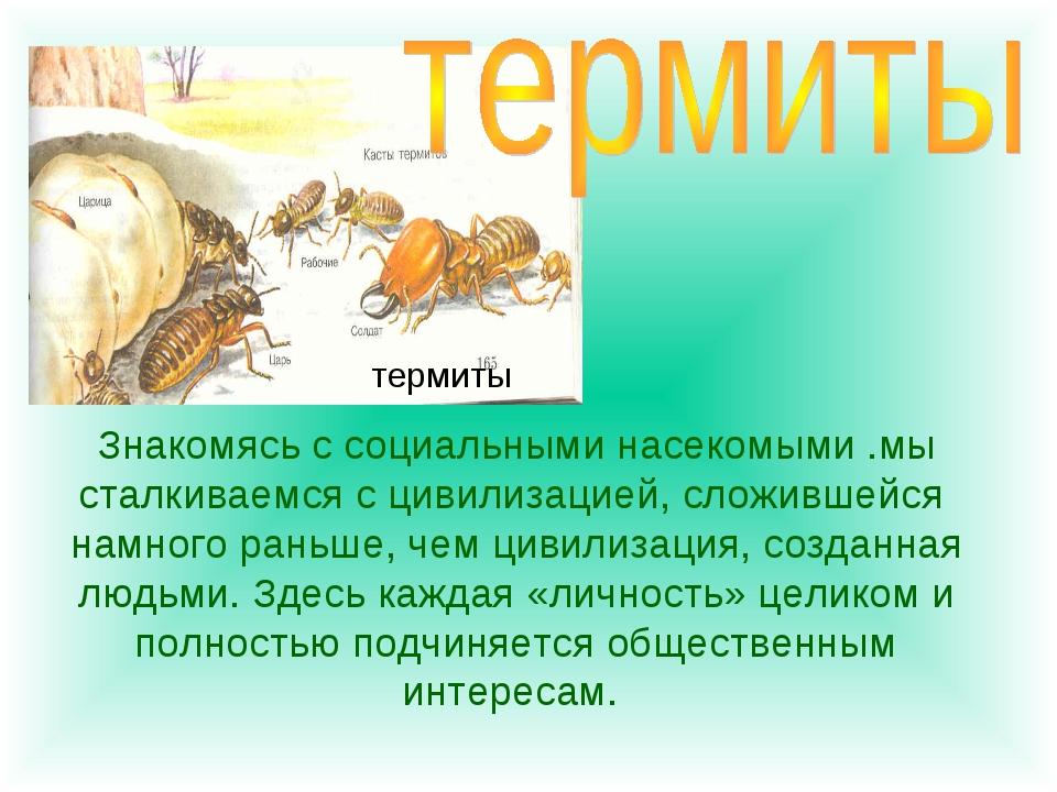Знакомясь с социальными насекомыми .мы сталкиваемся с цивилизацией, сложившей...