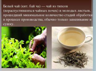 Белый чай (кит. бай ча) — чай из типсов (нераспустившихся чайных почек) и мол
