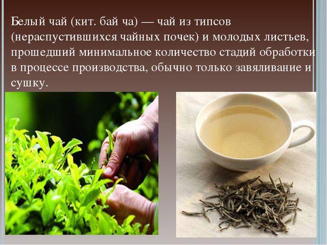 Белый чай (кит. бай ча) — чай из типсов (нераспустившихся чайных почек) и мол...