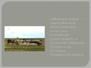 Северный олень — единственный представитель копытных, способный существовать