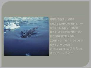 Финвал , или сельдяной кит, — очень крупный кит из семейства полосатиков. Дл