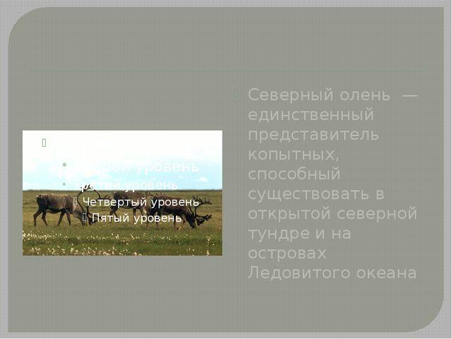Северный олень — единственный представитель копытных, способный существовать...