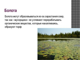 Болота Болота могут образовываться из-за зарастания озер, так как «мусорщики»