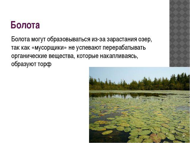 Болота Болота могут образовываться из-за зарастания озер, так как «мусорщики»...