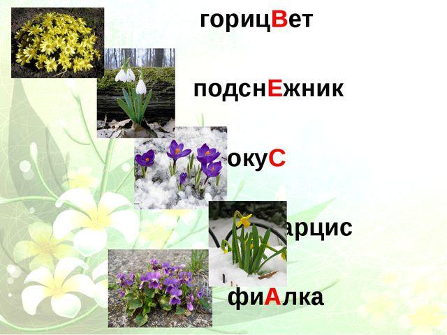 горицВет подснЕжник крокуС Нарцис фиАлка