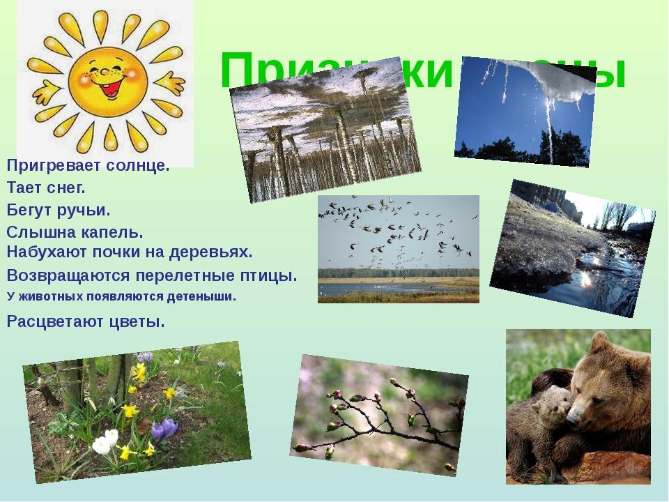 Признаки весны У животных появляются детеныши. Пригревает солнце. Тает снег....