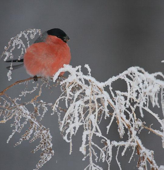 Зима, природа зимой фото