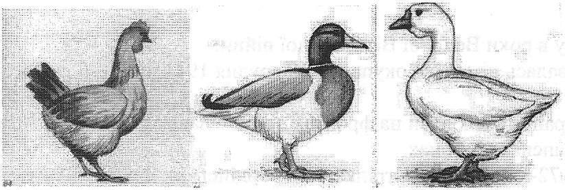 hello_html_31882127.jpg