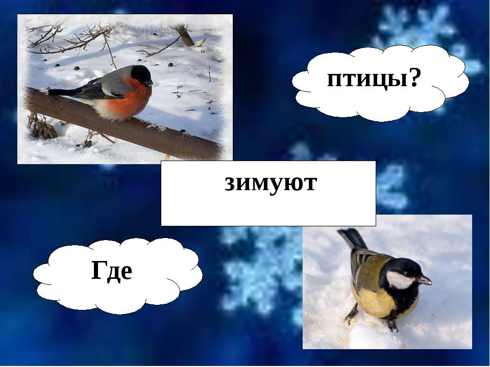 Где зимуют птицы?