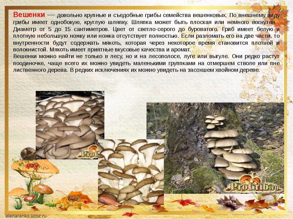 Вешенки — довольно крупные и съедобные грибы семейства вешенковых. По внешнем...