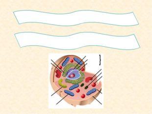 2.Гиалоплазманың химиялық құрамын қандай? 3. Цитоплазма құрамындағы мембрана