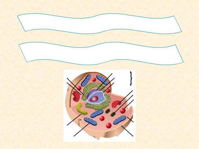 2.Гиалоплазманың химиялық құрамын қандай? 3. Цитоплазма құрамындағы мембрана...