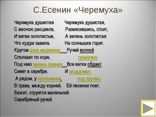 С.Есенин «Черемуха» Черемуха душистая Черемуха душистая, С весною расцвела, Р