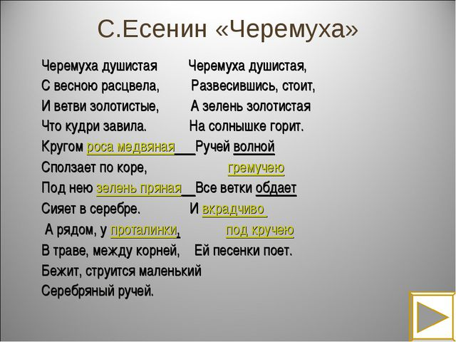 С.Есенин «Черемуха» Черемуха душистая Черемуха душистая, С весною расцвела, Р...
