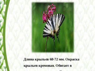 Длина крыльев 68-72 мм. Окраска крыльев кремовая. Обитает в зарослях кустарни