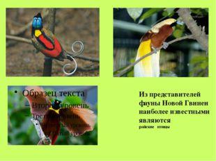VІ. Население. Коренными жителями Новой Гвинеи являются папуасы. Жилище папуа