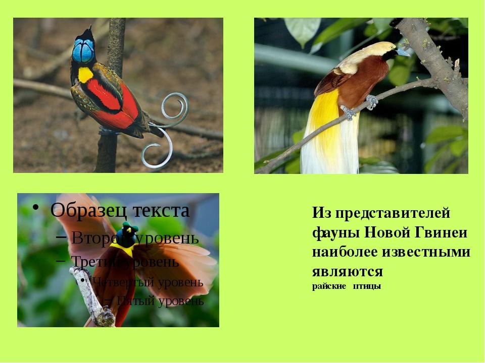 VІ. Население. Коренными жителями Новой Гвинеи являются папуасы. Жилище папуа...