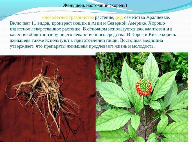 Женьшень настоящий (корень) Женьше́нь — многолетнее травянистое растение, ро...