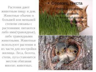 Растения дают животным пищу и дом. Животные обычно в большей или меньшей сте